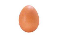 Hen Eggs på vit bakgrund arkivfoto
