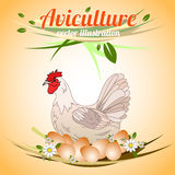 Hen with eggs. Poultry and aviculture. Vector illustration Royalty Free Stock Images