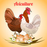 Hen with eggs. Poultry and aviculture. Vector illustration Stock Photography