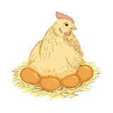 Hen on eggs Stock Photos