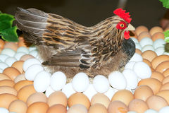 Hen and eggs Royalty Free Stock Photography
