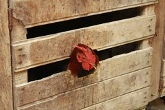 Hen enclosed in a wooden box. Hen enclosed in a wooden box looking outside and waiting to be fed Royalty Free Stock Image