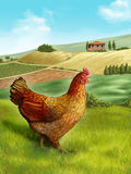 Hen and farm. Hen in a beautiful rural landscape. Digital illustration Royalty Free Stock Photo