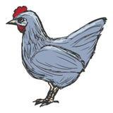 Hen, farm bird Stock Image