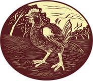 Hen Farm Oval Woodcut Imagen de archivo libre de regalías
