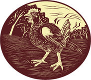 Hen Farm Oval Woodcut Royalty Free Stock Image
