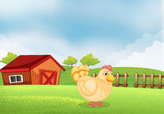 A hen in the farm with a wooden house at the back Royalty Free Stock Photo