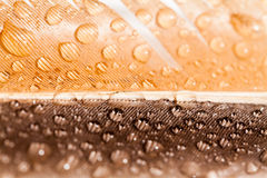 Hen feather with water drops Stock Photo