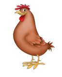 Hen funny animals Stock Image