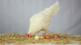 Hen with gold egg stock video footage