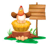 A hen hatching eggs with a wooden signboard Stock Images