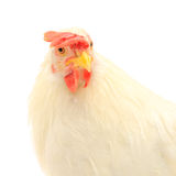 Hen head Stock Photography