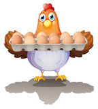 A hen holding a tray of eggs Stock Photo