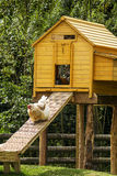 Hen house Stock Image