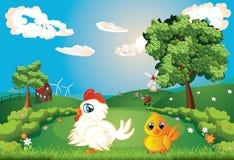Hen on Lawn. White hen with chicken on lawn, summer rural scene Stock Image