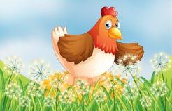 A hen laying eggs Stock Photos