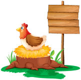 A hen near the empty wooden signboard Royalty Free Stock Images