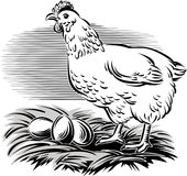 Hen in the nest Stock Photography