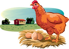 Hen in the nest. Hen with its nest of eggs stock illustration