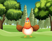 A hen at the park Stock Photography