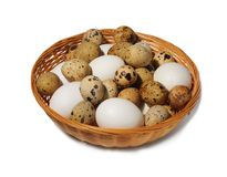 Hen and quail eggs in basket on the white background. Isolated Stock Photography