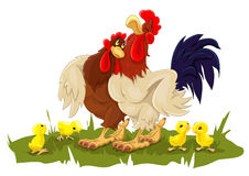 Hen and rooster with chickens Royalty Free Stock Photo