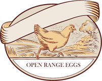 Hen Running Open Range Eggs Oval Drawing Stock Photography