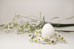Hen`s egg Royalty Free Stock Images