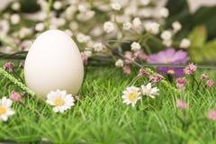 Hen`s egg Stock Photography