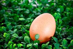 Hen's egg in grassy background Royalty Free Stock Image