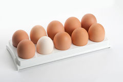 The hen's eggs in egg holder Royalty Free Stock Photo