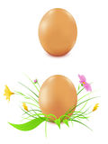 Hen's eggs on a white background Stock Image