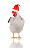 Hen in a Santas hat. Royalty Free Stock Photo
