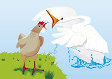 Hen and swan fighting Royalty Free Stock Images