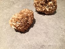 Hen of the woods (maitake) mushrooms on kitchen countertop Stock Photos