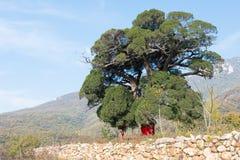 HENAN CHINY, Nov, - 03 2015: Songyue monasteru ruiny sławny Cześć Fotografia Royalty Free