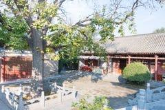 HENAN KINA - November 04 2015: Yongtai tempel en berömd historisk si Royaltyfria Bilder