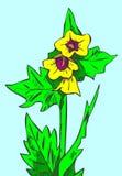 Henbane preto (Hyoscyamus niger) Imagem de Stock Royalty Free