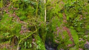 Hendidura cubierta de musgo verde con una cala que corre a través en el dólar Glen Park en Escocia metrajes