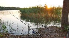 Hengel op rivier stock footage