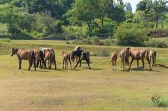 Hengst, der Führer der Herde der Pferde fing den Geruch eines Fremden und fing an, einen erschreckenden Tanz zu tanzen lizenzfreies stockbild