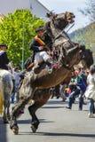Hengst, der mit Reiter in Brasov, Rumänien aufrichtet Stockfotografie