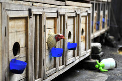 Henhouses. The chicken coops are specially for a restaurant Royalty Free Stock Photography