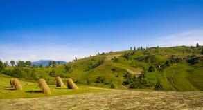 Henil de oro en el prado de la montaña del verano fotos de archivo libres de regalías