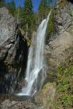 Henline tombe dans la réserve forestière de Willamette de l'Orégon image libre de droits