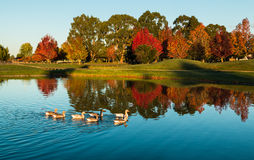 Henly lake Autumn Royalty Free Stock Images