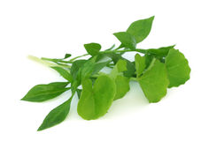 Herbes médicinales Photo libre de droits