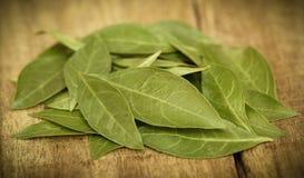 Henna Leaves imagen de archivo libre de regalías