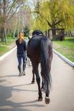 henne hästkvinnabarn Arkivfoto
