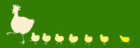 Henne mit Hühnern Stockbild